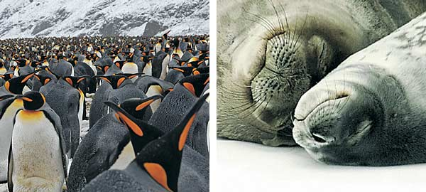 Antarctic Cruises & Tours - Penguin Colony